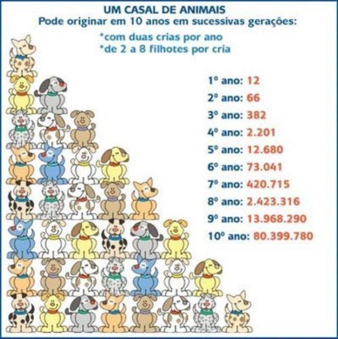 castracao-685x688.jpg