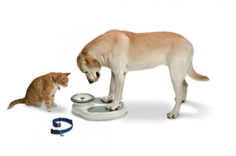 DogStandingOnScale.jpg
