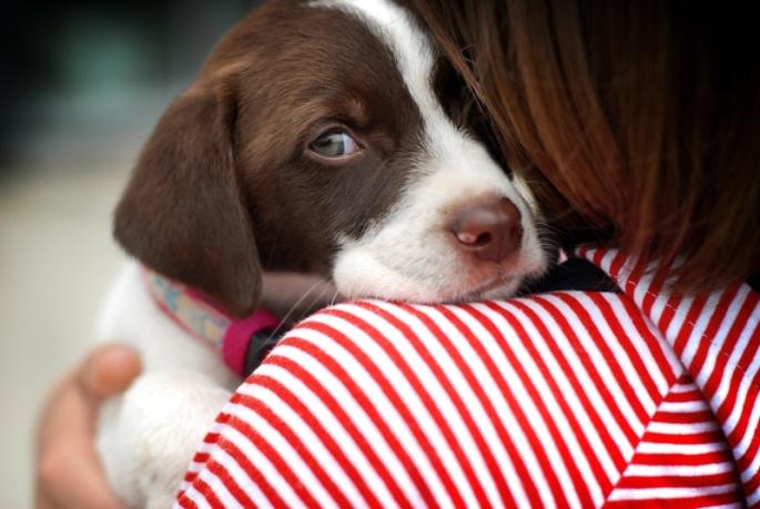 Cachorro-Primeiros-Cuidados.jpg