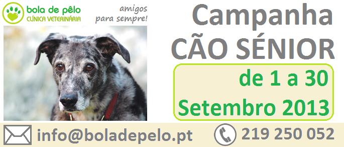 Campanha-Cao-Senior-Imagem-Website-4.png