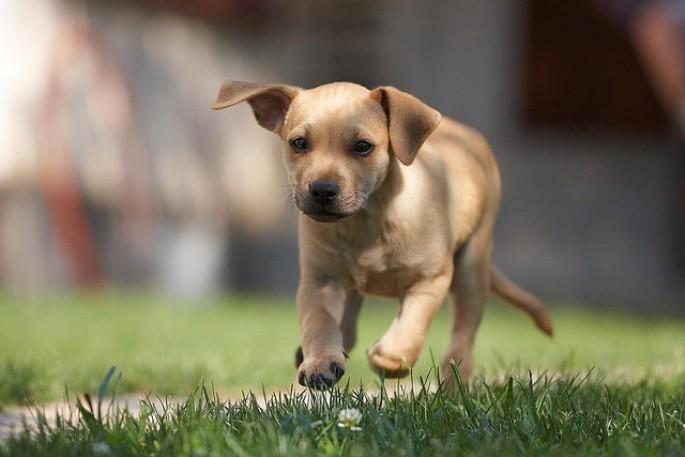 puppy-grass.jpg
