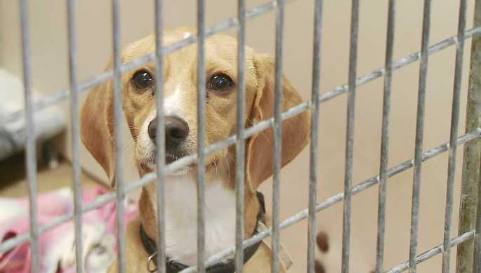 dog-pet-adoption-red.jpg
