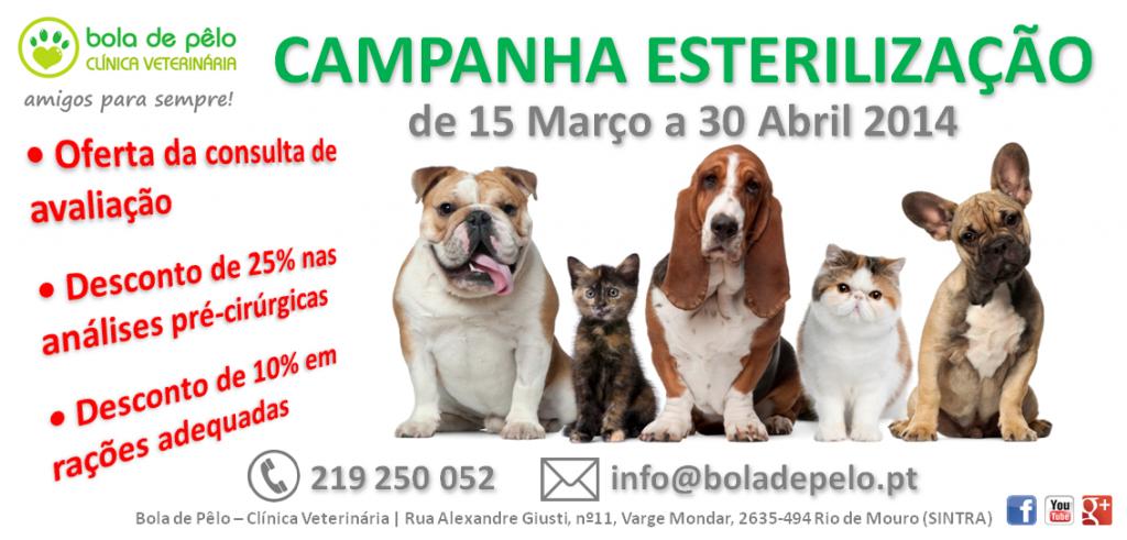 Campanha-Esterilizacao-Imagem-Website-1024x491.png