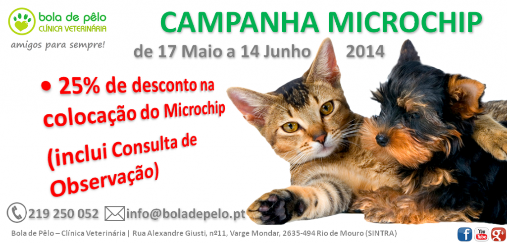 Campanha-Microchip-Imagem-Website-1024x491.png