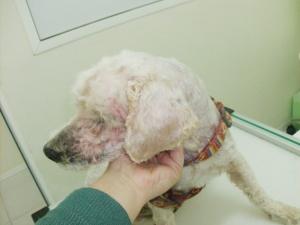 O nosso paciente Kiko