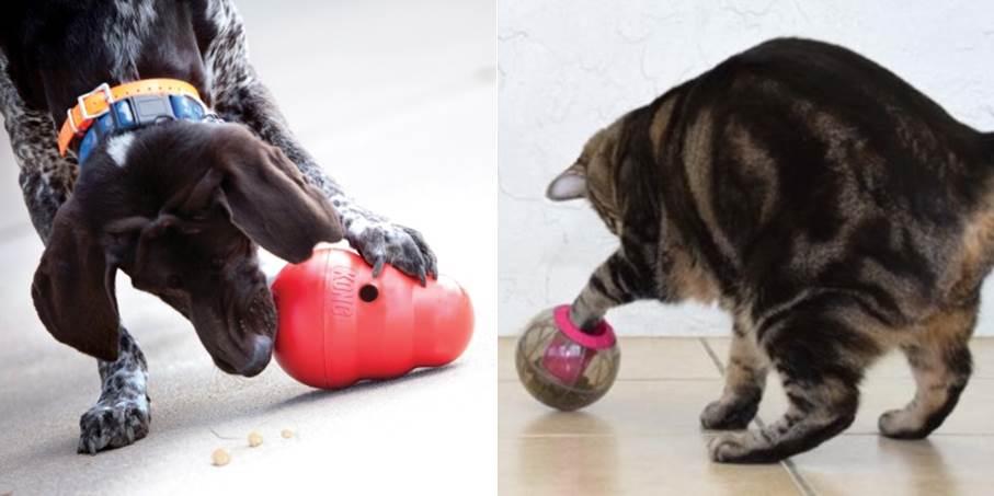 Cao com Kong Wobbler e gato com Catmosphere 2